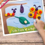 printable lifecycle of a butterfly mat