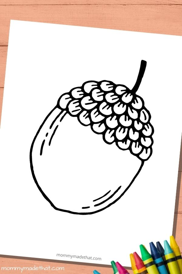 large printable acorn coloring page template
