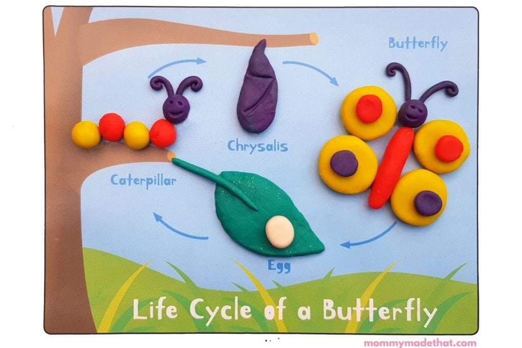 Life cycle of a butterfly printable play mat